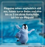 Pinguine.jpg auf www.funpot.net