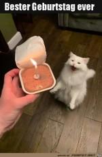 Super-Katzen-Geburtstag.jpg auf www.funpot.net