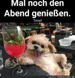 Hund-genießt-den-Abend.jpg auf www.funpot.net