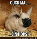 Hops.jpg auf www.funpot.net