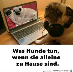 Was-Hunde-tun.jpg auf www.funpot.net