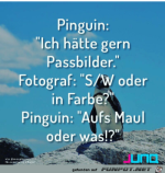 Lustiger-Pinguin.png auf www.funpot.net
