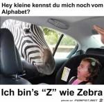 Zebra.jpg auf www.funpot.net