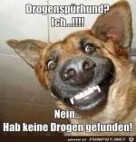 Hund-hat-nichts-gefunden.jpg auf www.funpot.net