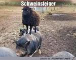 Schweinsteiger.jpg auf www.funpot.net