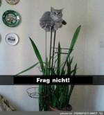 Ich-bin-eine-Pflanze.jpg auf www.funpot.net