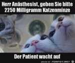 Katzenminze-erforderlich.jpg auf www.funpot.net