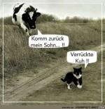 verrückte-Kuh.....jpg auf www.funpot.net