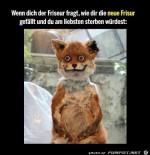 Die-neue-Frisur.jpg auf www.funpot.net