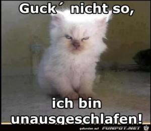 guck-nicht-so.jpg auf www.funpot.net