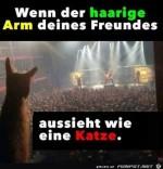 Katzen-Arm.jpg auf www.funpot.net