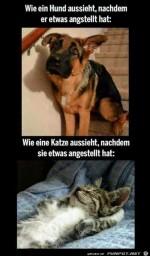 Hund-und-Katze.jpg auf www.funpot.net