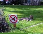Ich-bin-schließlich-kein-Hund.jpg auf www.funpot.net