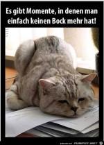 Katze-hat-keine-Lust.jpg auf www.funpot.net