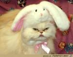 Ich-hasse-Ostern.jpg auf www.funpot.net