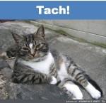 Tach.jpg auf www.funpot.net