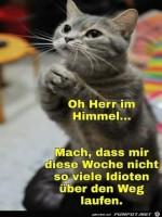 Katze-betet.jpg auf www.funpot.net