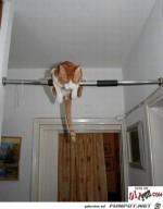 Katzenstange.jpg auf www.funpot.net