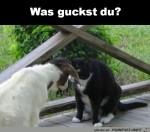 Was-guckst-du?.jpg auf www.funpot.net
