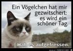 grumpy-cat.jpg auf www.funpot.net