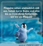 Ein-Pinguin.jpg auf www.funpot.net