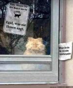 Bitte-die-Katze-nicht-rauslassen.jpg auf www.funpot.net