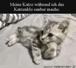Meine-Katze,-wenn-ich-ihr-Klo-sauber-mache.jpg auf www.funpot.net