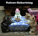 so-sieht-ein-ordentlicher-Katzengeburtstag-aus.jpg auf www.funpot.net