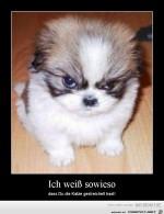 Ich-weiß-es-!.jpg auf www.funpot.net