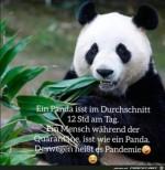 Ein-Mensch-isst-während-der-Quarantäne-wie-ein-Panda.jpg auf www.funpot.net