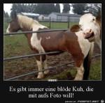 Blöde-Kuh.jpg auf www.funpot.net