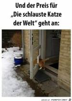 Die-schlauste-Katze-der-Welt.jpg auf www.funpot.net