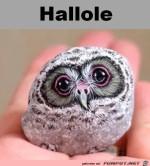 Hallole.jpg auf www.funpot.net