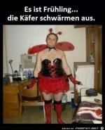 Die-Käfer-im-Frühling.jpg auf www.funpot.net