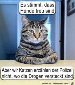 Hunde-sind-treu.png auf www.funpot.net