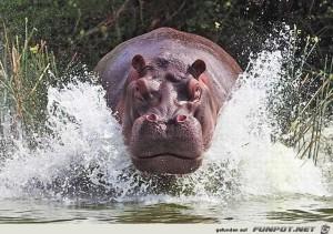 Fabelhafte Tieraufnahmen 13