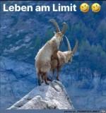 Leben-am-Limit.jpg auf www.funpot.net