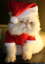 Katzen-Nikolaus.jpg auf www.funpot.net