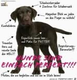 Hunde-sind-einfach-perfekt.jpg auf www.funpot.net