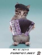 Musiker.jpg auf www.funpot.net