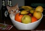 Besonderer-Früchtekorb.jpg auf www.funpot.net