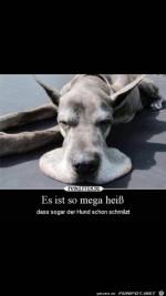 Der-Hund-schmilzt.jpg auf www.funpot.net