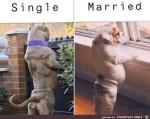 Unterschied-zwischen-single-und-verheiratet.jpg auf www.funpot.net