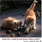 Kätzchen.jpg auf www.funpot.net