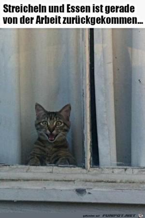 Katze-freut-sich-auf-ihren-Sklaven.jpg auf www.funpot.net