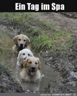 Wellnesstag-für-Hunde.jpg auf www.funpot.net