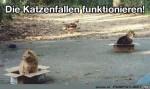 die-Katzenfallen-funktionieren.jpg auf www.funpot.net