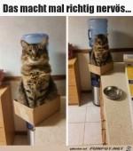 Diese-Katze-macht-einen-echt-nervös.jpg auf www.funpot.net