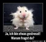 Hamster.jpg auf www.funpot.net