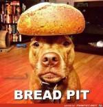 Bread-Pit.jpg auf www.funpot.net
